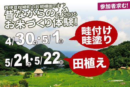 西伊豆松崎町石部棚田「昔ながらのお米作り体験」