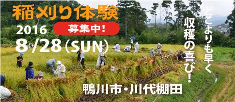 Top_page_Kawashiro_inekari2016
