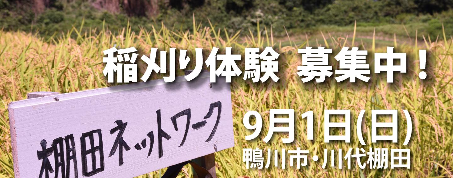 banner_kawashiro77