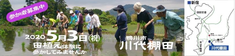 【イベント】5月3日鴨川市の棚田で田植え体験を行います